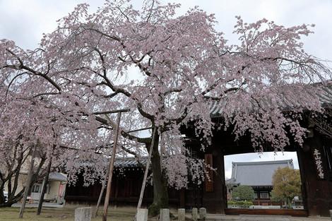 Myoukakuji1704081
