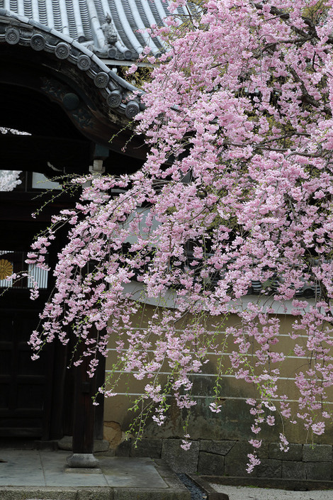 Myoukenji1704103