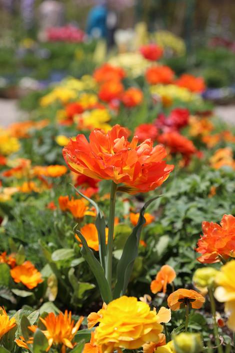 Gardenmuseumhiei1705051