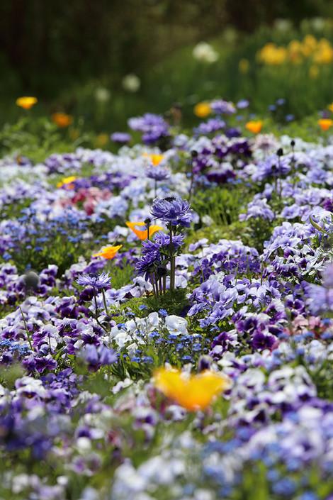 Gardenmuseumhiei1705053