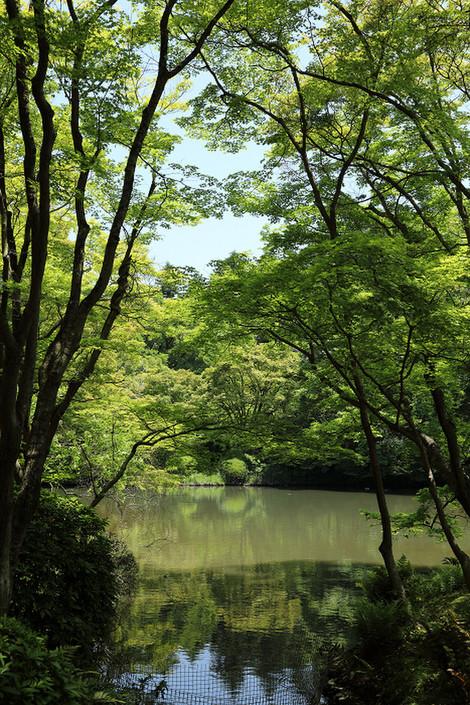 Kyotofuritusyokubutuen1705251