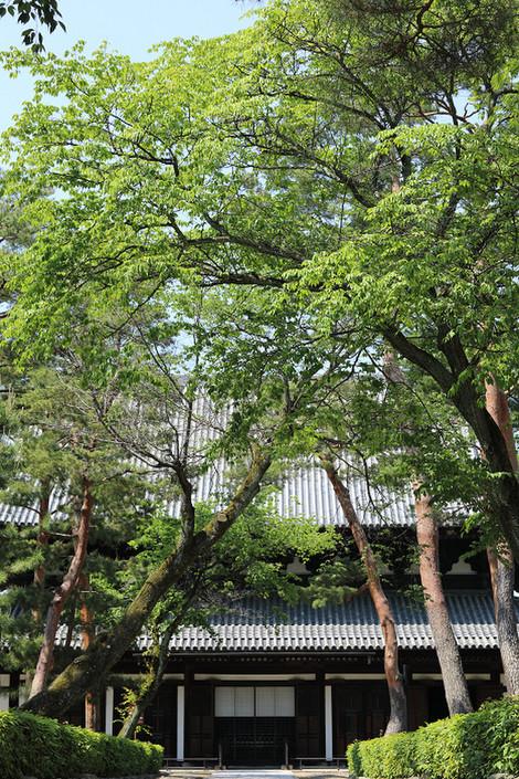Syoukokuji1705271