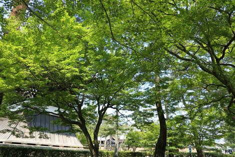 Syoukokuji1705272