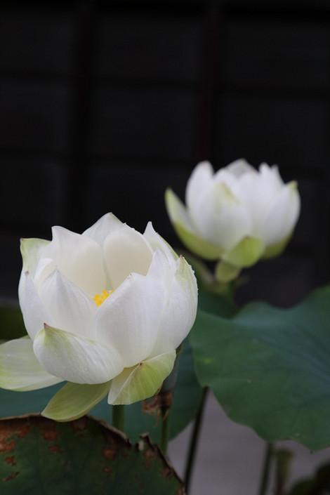 Tofukuji1706273
