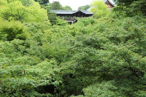 Tofukuji1706276