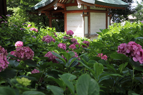 Fujinomorijinjya1707036