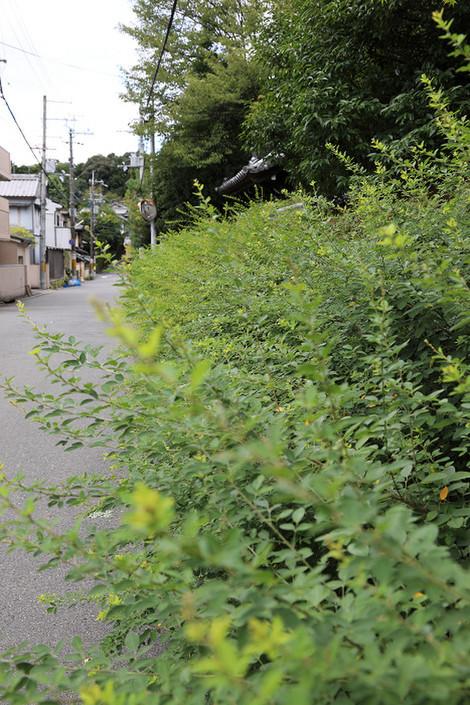 Kousyouji1709201