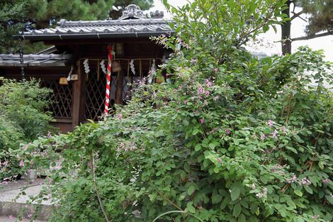 Sainokaminoyasiro1709222
