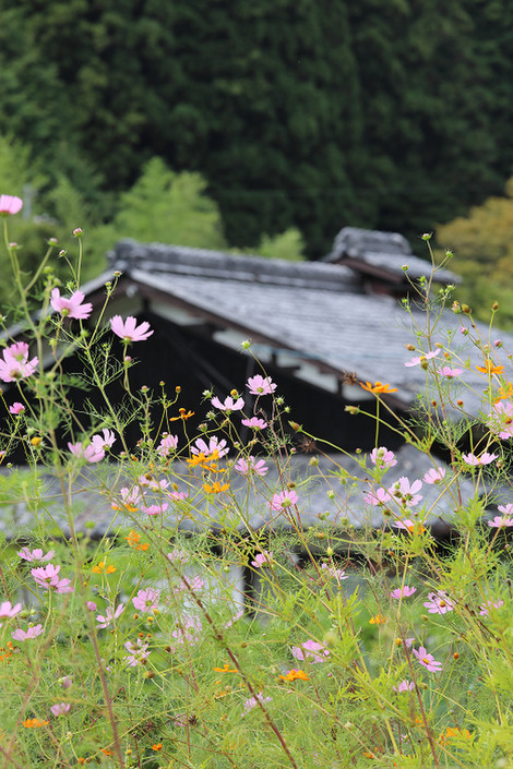 Kosumosu1709261