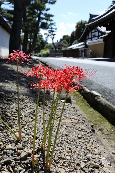 Syoukokuji1710051