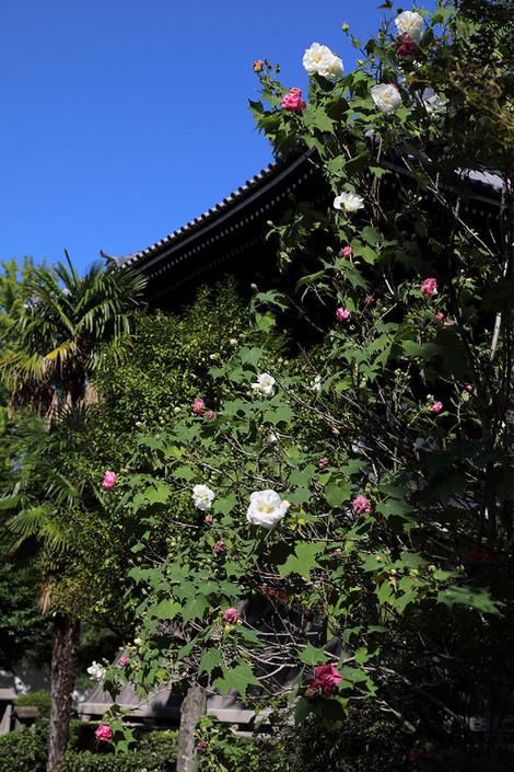 Syoukokuji1710053