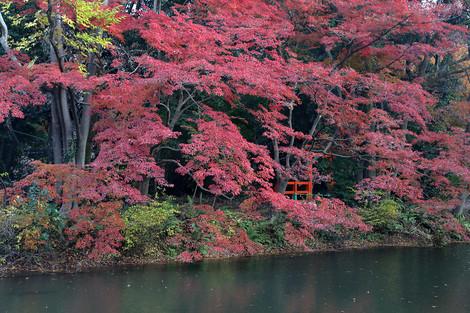 Kyotofuritusyokubutuen17275