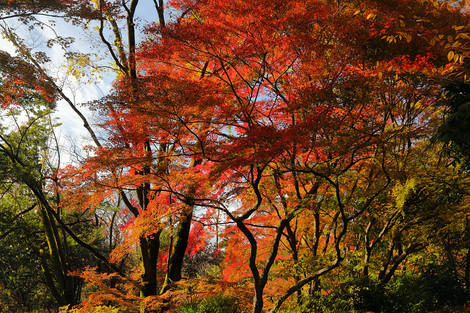 Kyotofuritusyokubutuen17276