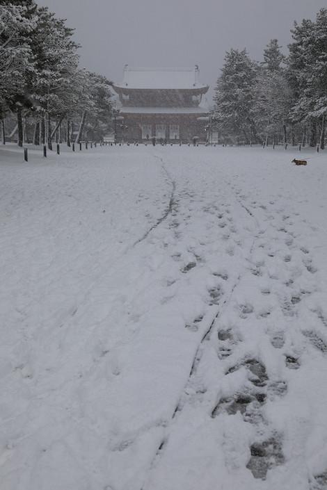 Heianjingu1801121_2