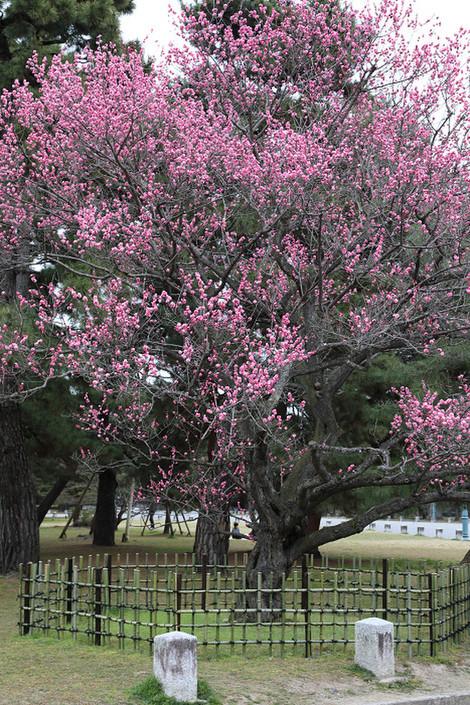 Kyotogyoen1801161