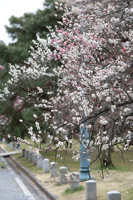 Kyotogyoen1801162