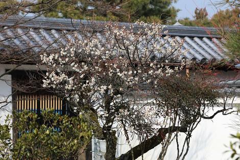 Houkouji1803012