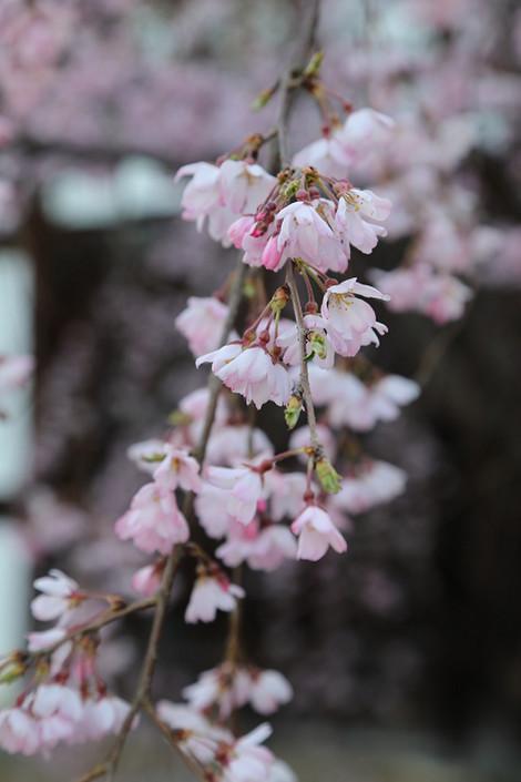 Kenninji1803272