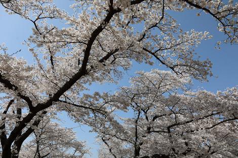 Kyotofuritusyokubutuen1804056