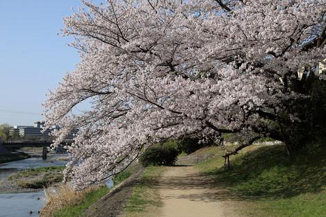 Takanogawa1804035