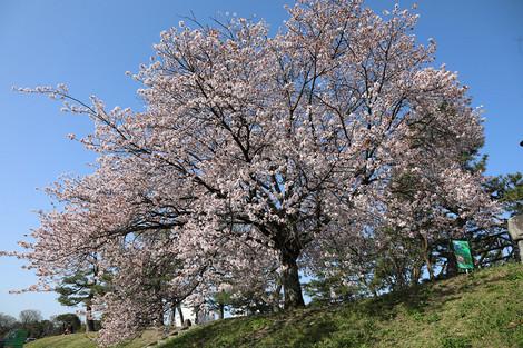 Takanogawa1804036