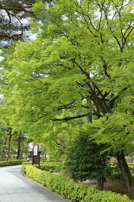 Syoukokuji1704182