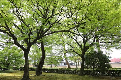 Syoukokuji1704183
