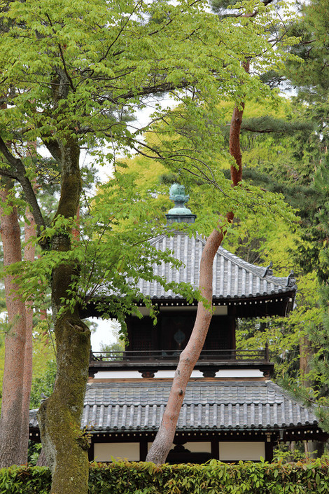 Syoukokuji1704186