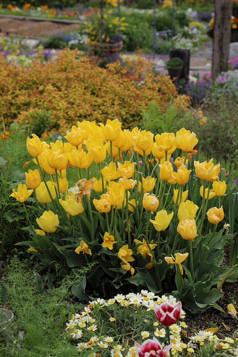 Gardenmuseumhiei1805283