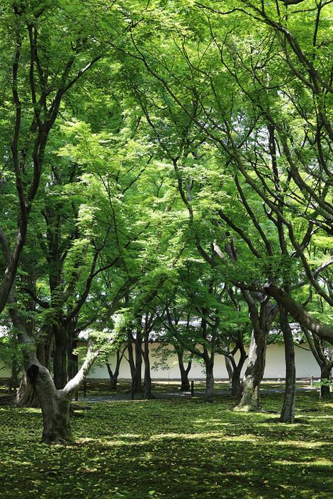 Toufukuji1805202