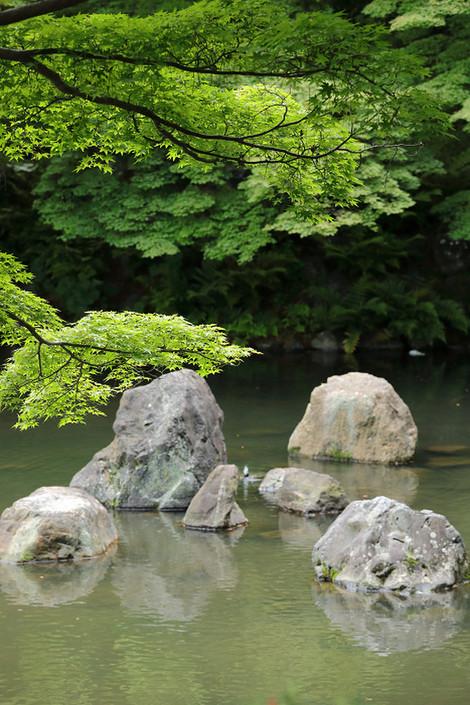 Maruyamakouen18052326