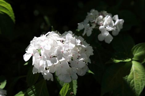 Kyotofuritusyokubutuen1806073