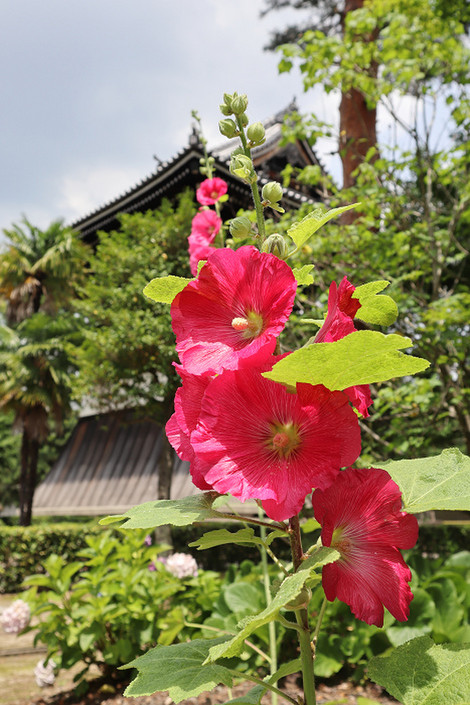 Syoukokuji1807061