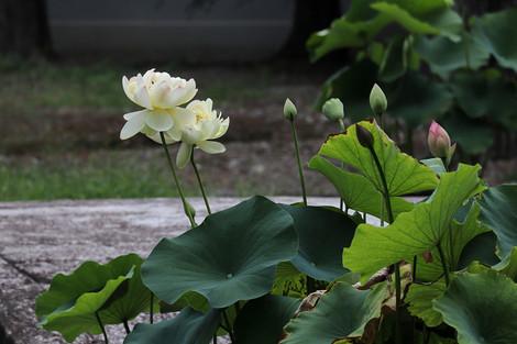 Syoukokuji1807063