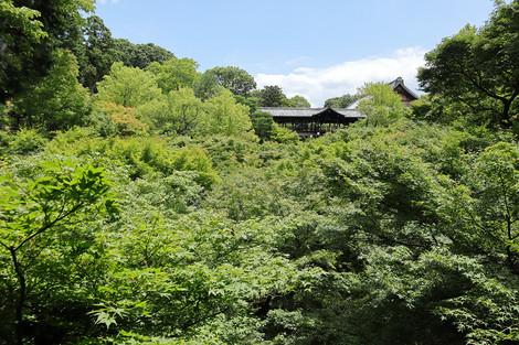 Toufukuji1807111