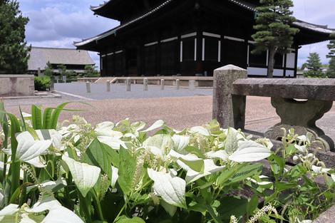 Toufukuji1807113