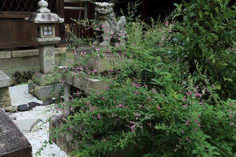 Sainokaminoyasiro1809131