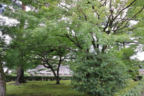 Syoukokuji1809213
