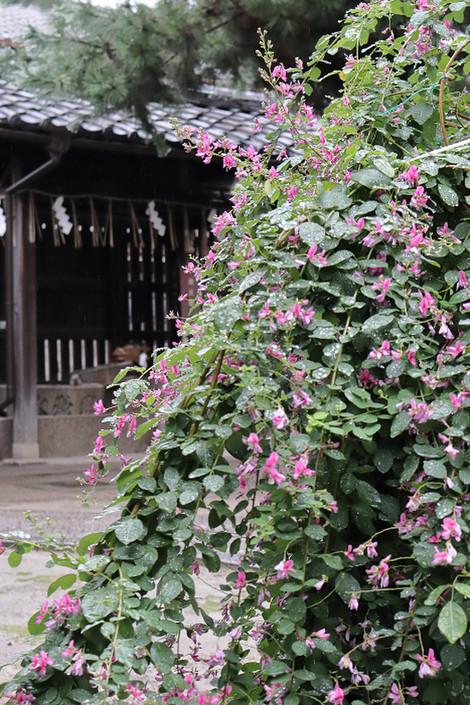 Sainokaminoyaasiro1809251