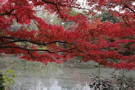 Kyotofuritusyokubutuen1811282
