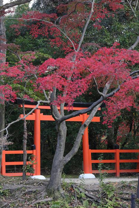 Kyotofuritusyokubutuen1811285