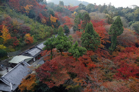 Kiyomizudera1812033