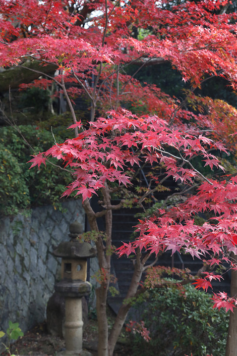 Kousyouji1812051