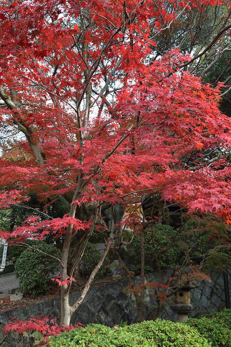 Kousyouji1812056