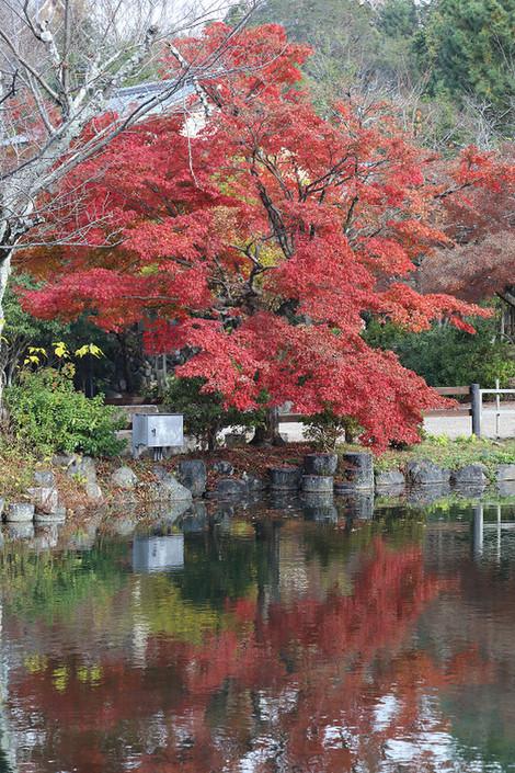 Maruyamokouen1812081