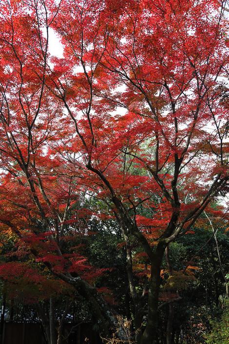Maruyamokouen1812082