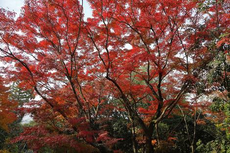 Maruyamokouen1812086