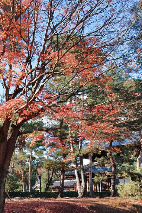 Syoukokuji1812132